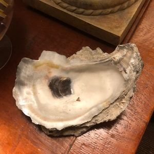 Giant natural oyster shell